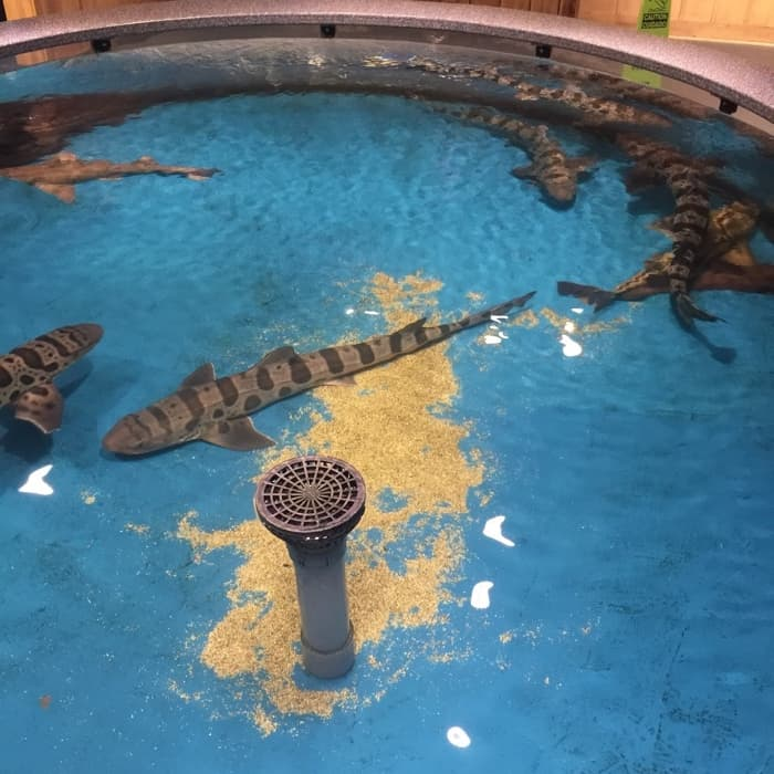 Overnight at the Aquarium 9