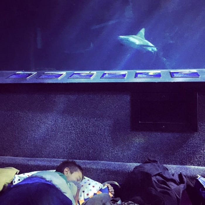 Sleep with the Sharks at Newport Aquarium