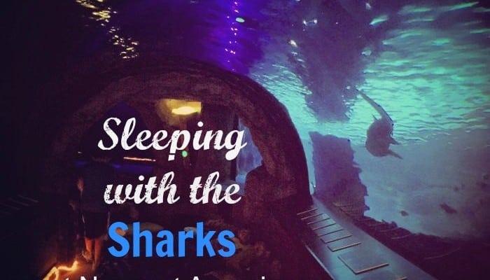 Sleeping with the Sharks at Newport Aquarium
