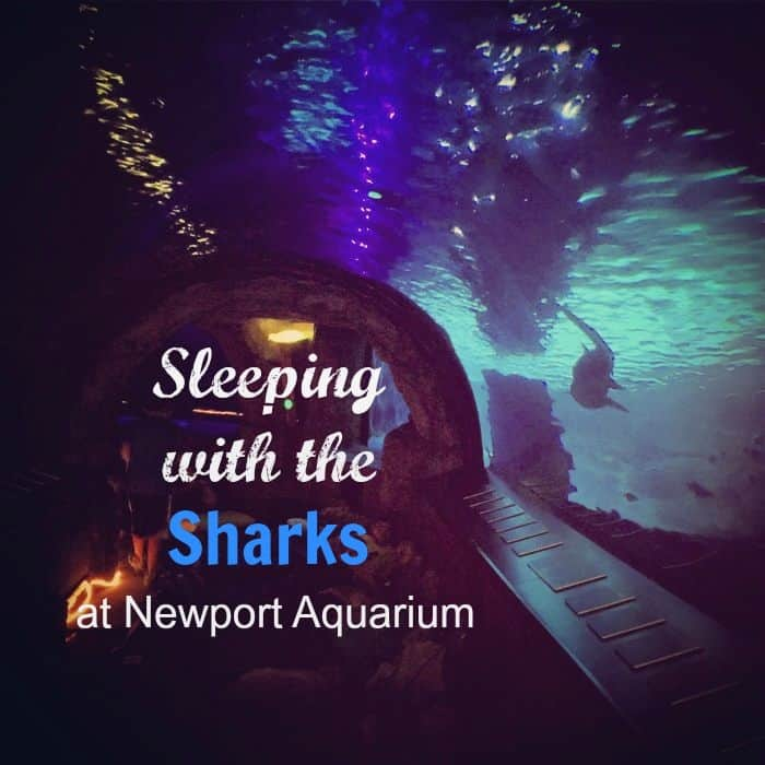 Sleeping with the Sharks at the Newport Aquarium