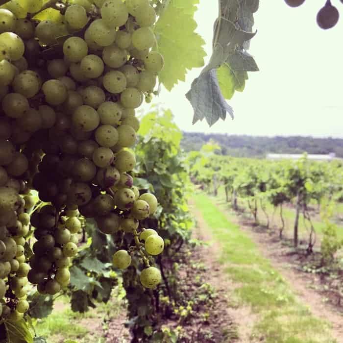 Vinoklet Winery 3