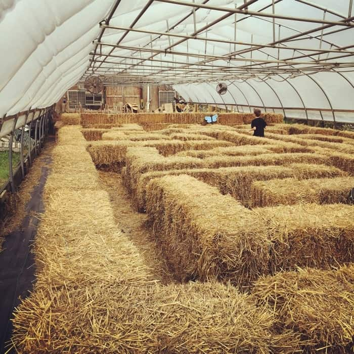 Blooms and Berries Farm Market hay maze