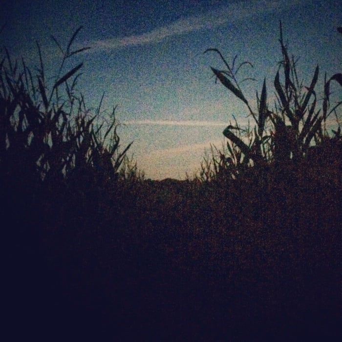 Corn Maze Bonnybrook Farms