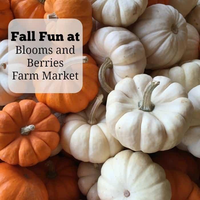 Fall Fun at Blooms and Berries Farm Market