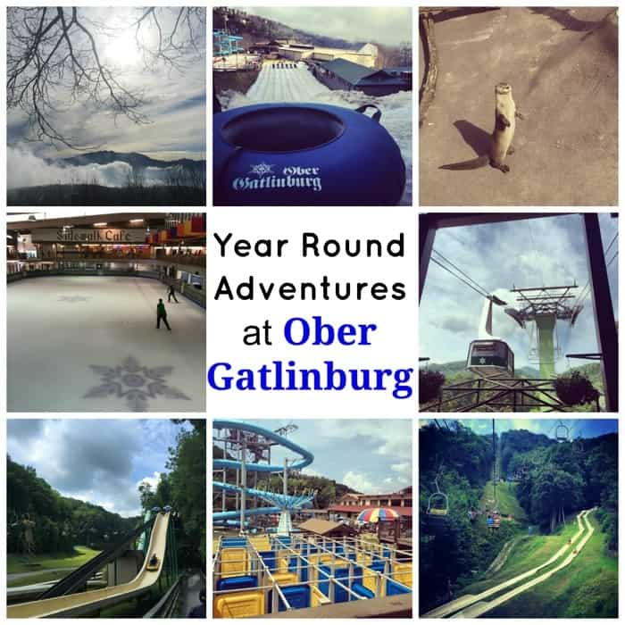 Year Round Adventures at Ober Gatlinburg