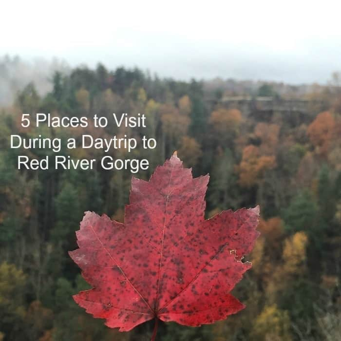 Places To Visit In Northern Ky: 5 Places To Visit During A Daytrip To Red River Gorge
