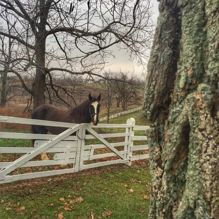Horse at fence Shaker Village