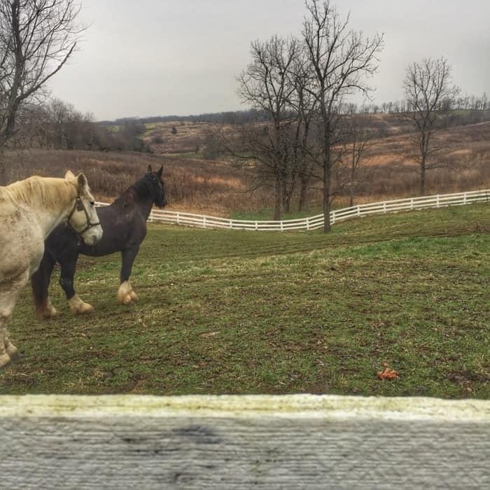 horses at Shaker Village