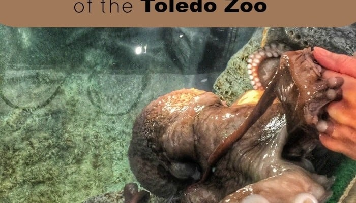 A Behind the Scenes Tour of the Toledo Zoo