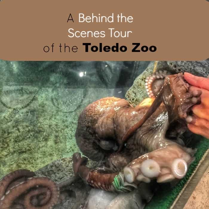 A Behind the Scenes Tour of the Toldeo Zoo