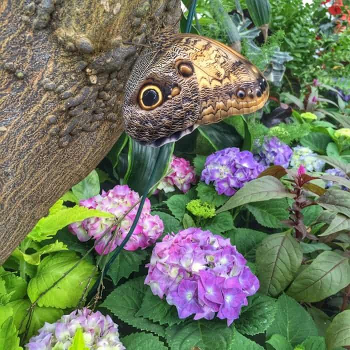 Butterflies of the Caribbean 21
