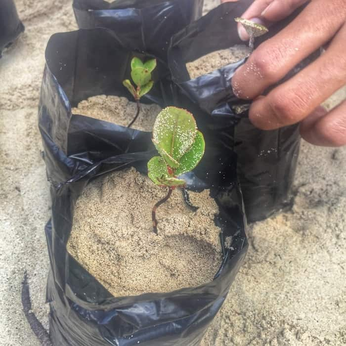 Reforestion with Fathom Travel 7