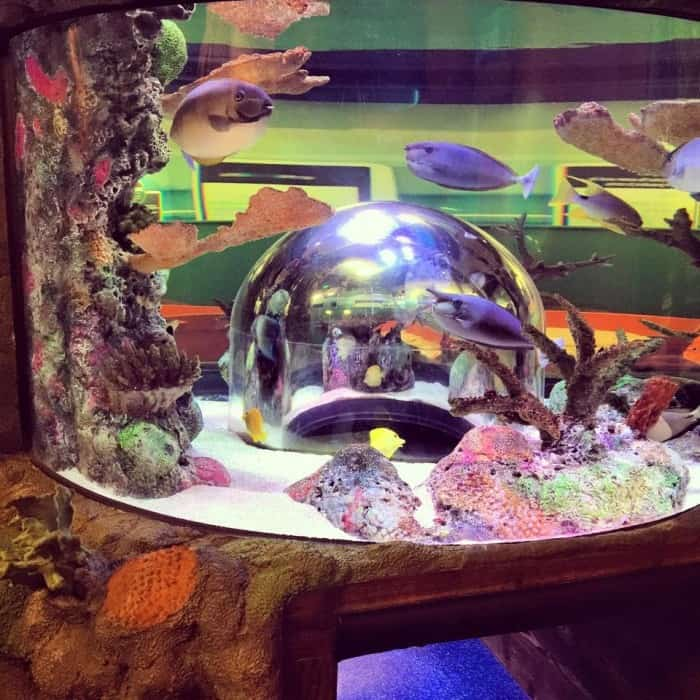 SEA LIFE Kansas City Aqauarium bubble viewing