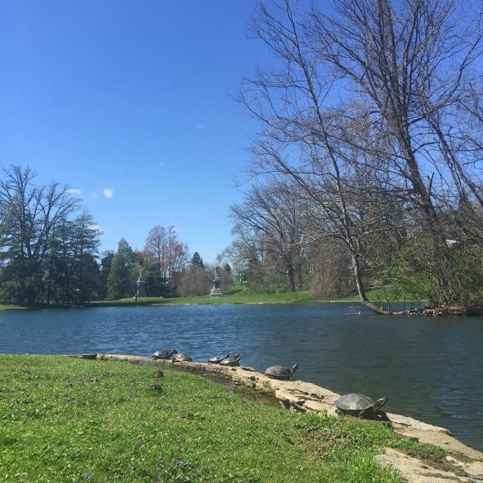 Spring Grove Cemetery 7