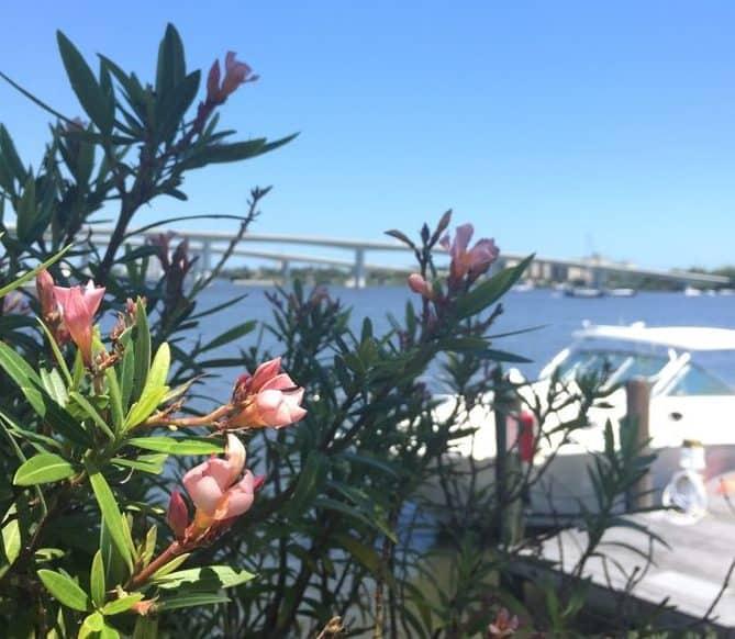 Views at Caribbean Jack's in Daytona Beach, FL
