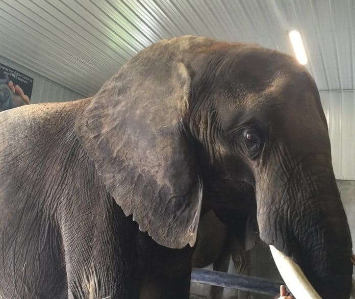 Elephant Retreat at Wilstem Ranch 10