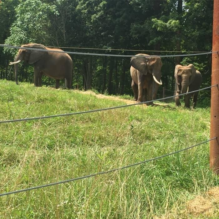 Elephant Retreat at Wilstem Ranch 12