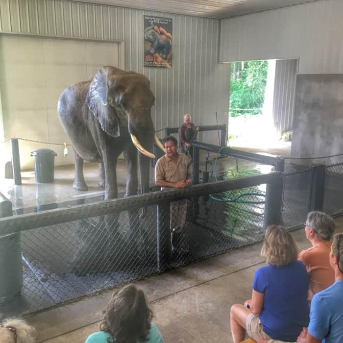 Elephant Retreat at Wilstem Ranch 13