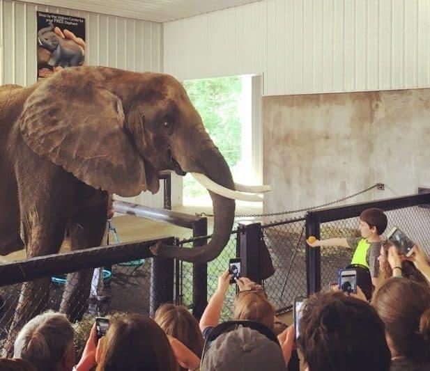 Elephant Retreat at Wilstem Ranch 18