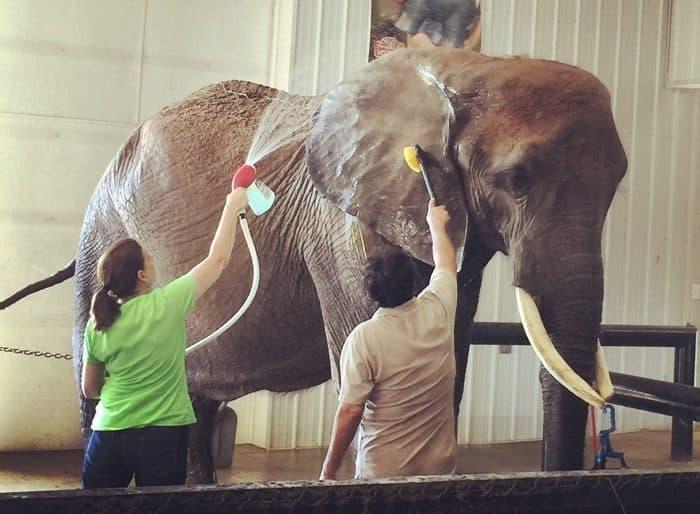 Elephant Retreat at Wilstem Ranch 20