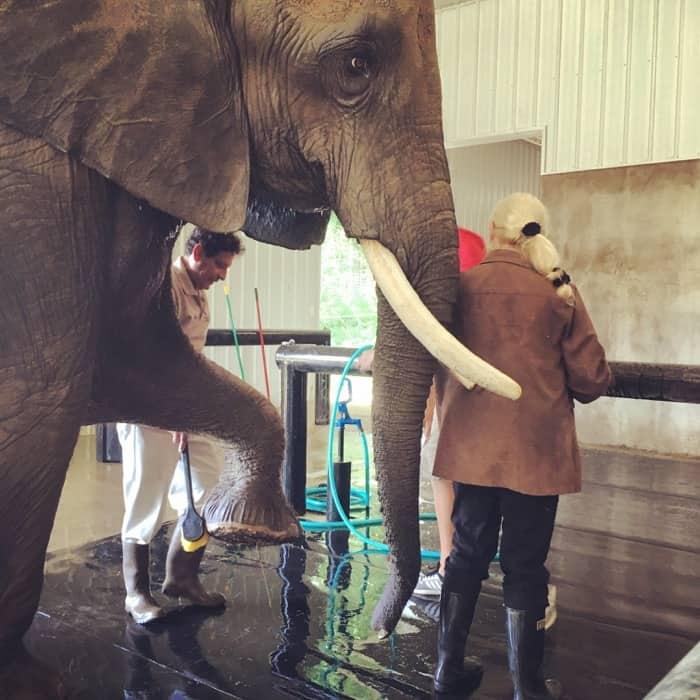 Elephant Retreat at Wilstem Ranch 21