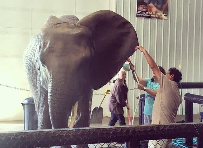 Elephant Retreat at Wilstem Ranch 22