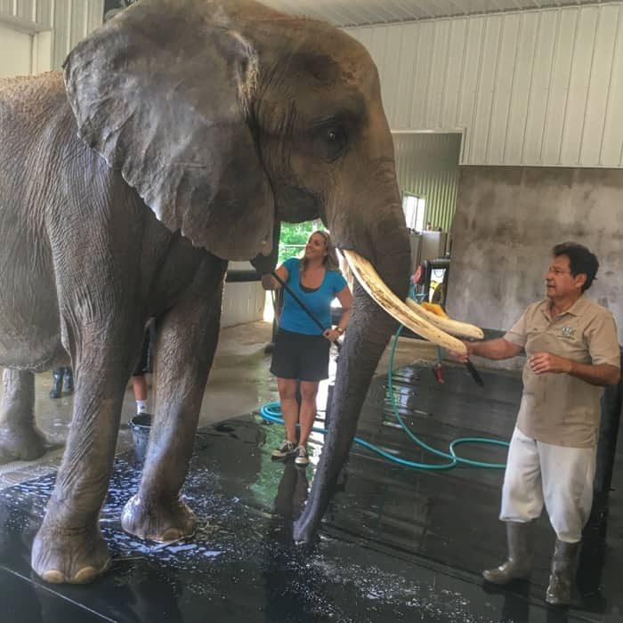 wilstem-ranch-indiana-elephant-encounter-adventure-mom-blog