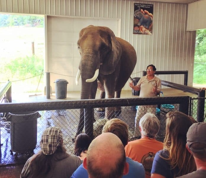 Elephant Retreat at Wilstem Ranch 27