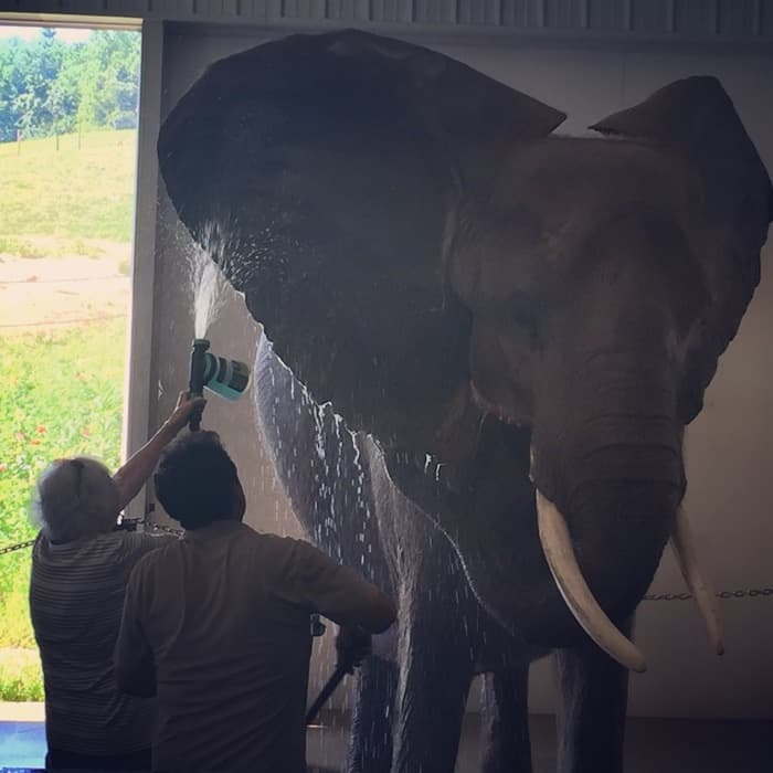 Elephant Retreat at Wilstem Ranch 33
