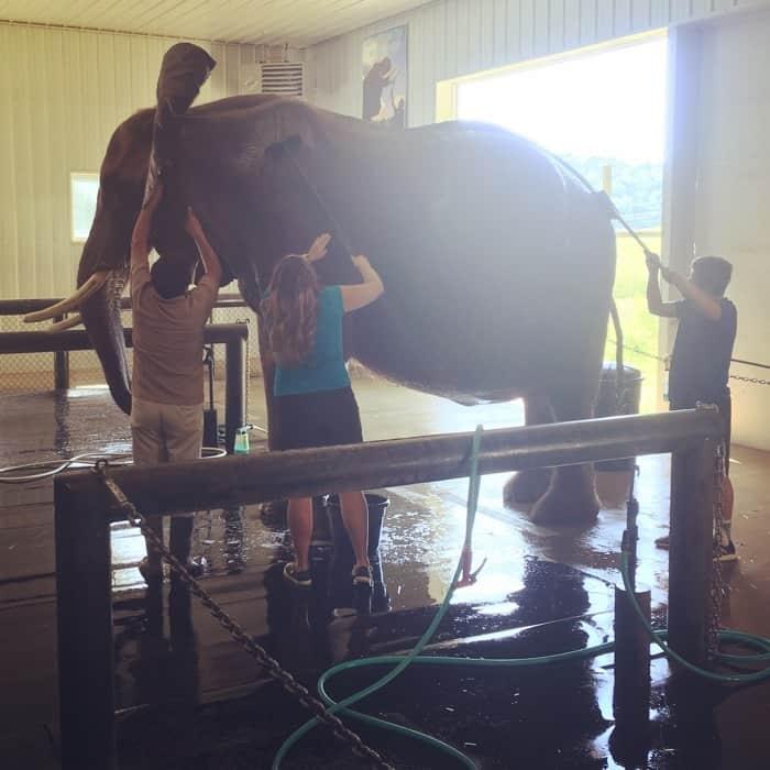 Elephant Retreat at Wilstem Ranch 34