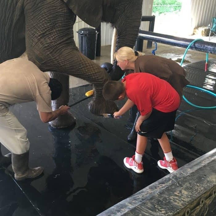 Elephant Retreat at Wilstem Ranch