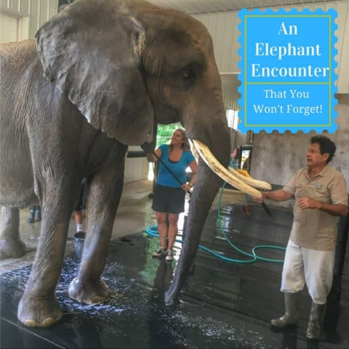 If you love elephants, this elephant encounter is a must!
