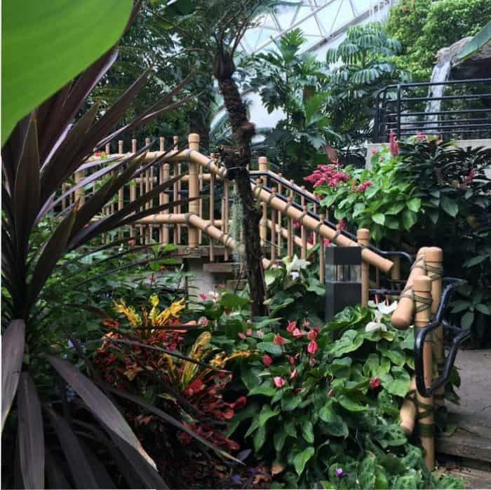 Inside Foellinger-Freimann Botanical Conservatory