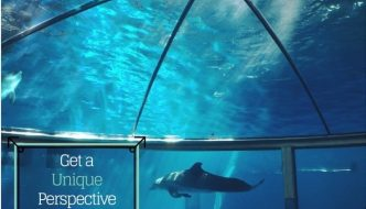 Get a Unique Perspective of Dolphins at the Indy Zoo
