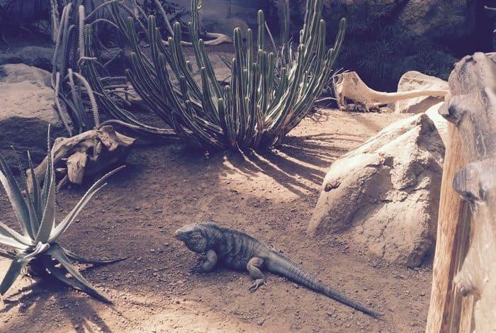Indianapolis Zoo 12