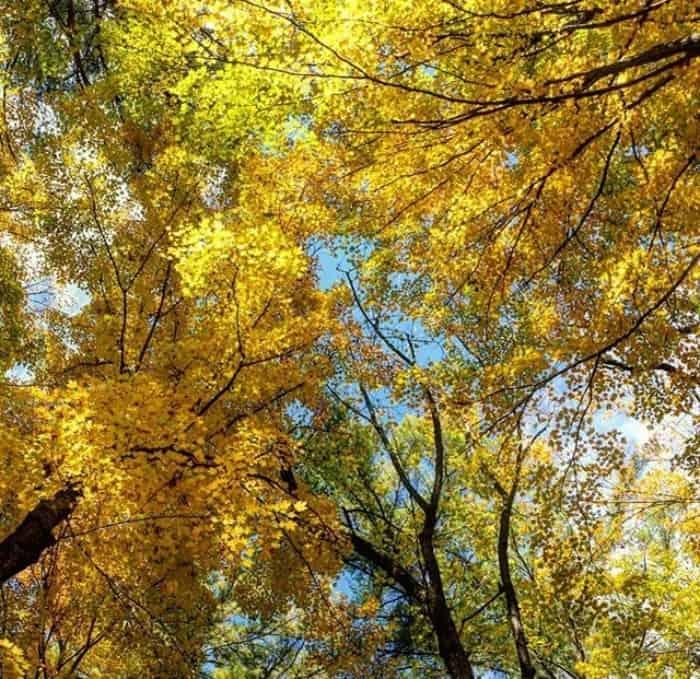 Muskegon Michigan Fall Colors