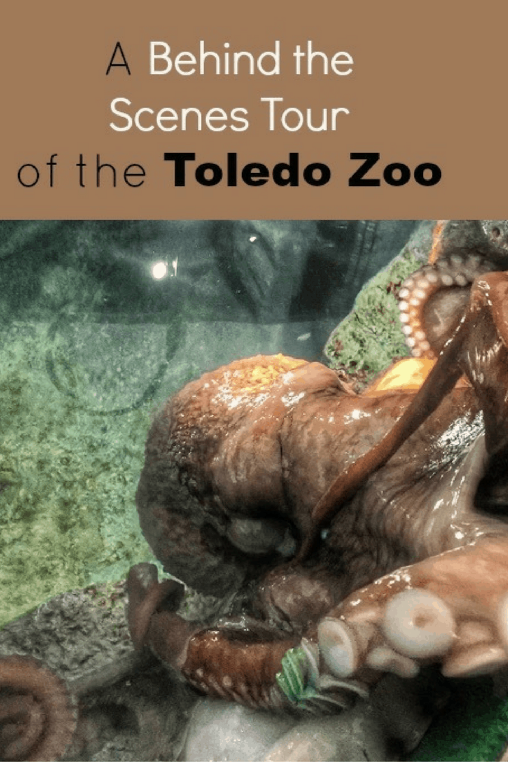 A Behind the Scenes Tour of the Toledo Zoo - Adventure Mom