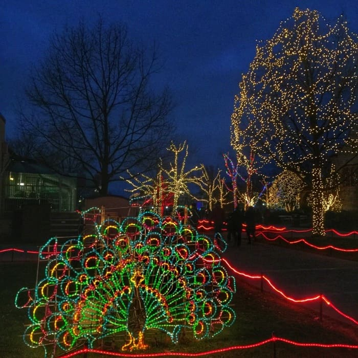 holiday-lights-online-deals-discounts-adventure-mom-blog