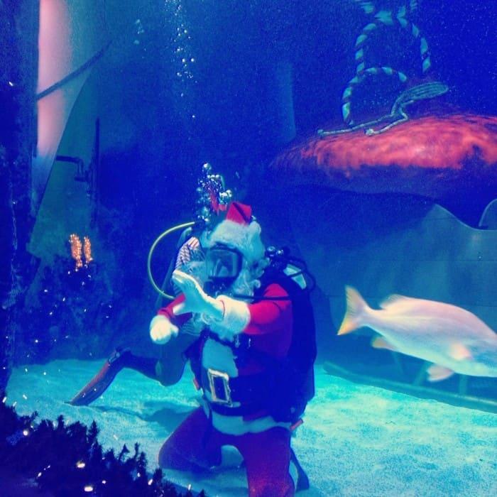 Scuba Santa at the Newport Aquarium