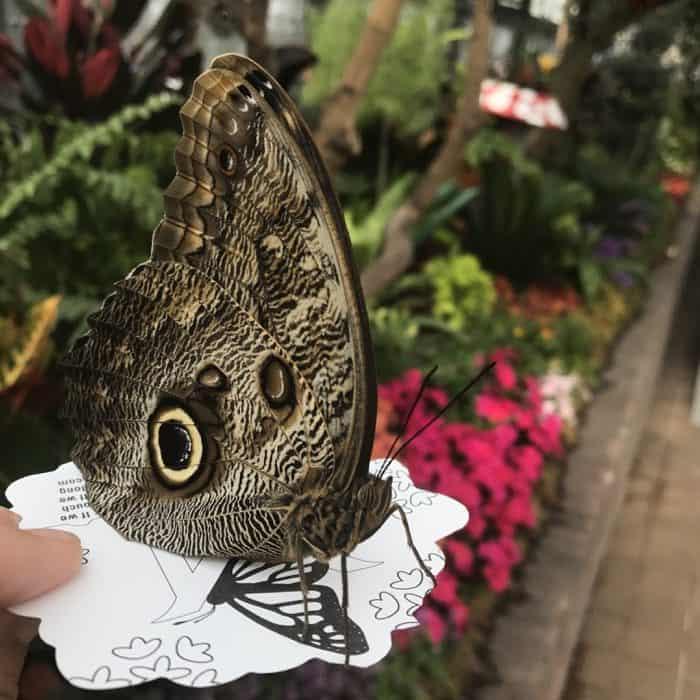 butterfly inside Krohn Conservatory in Cincinnati
