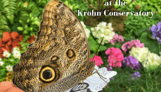 The Butterflies are Back at the Krohn Conservatory