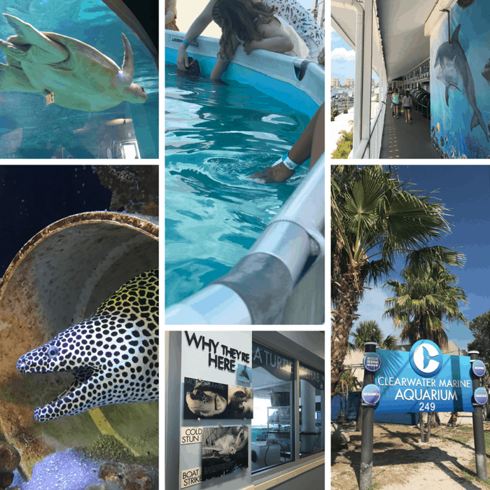 Clearwater Marine Aquarium in FL