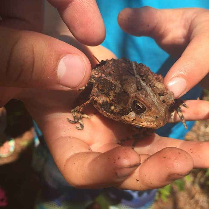 kids with frog individual attention to learn with homeschooling