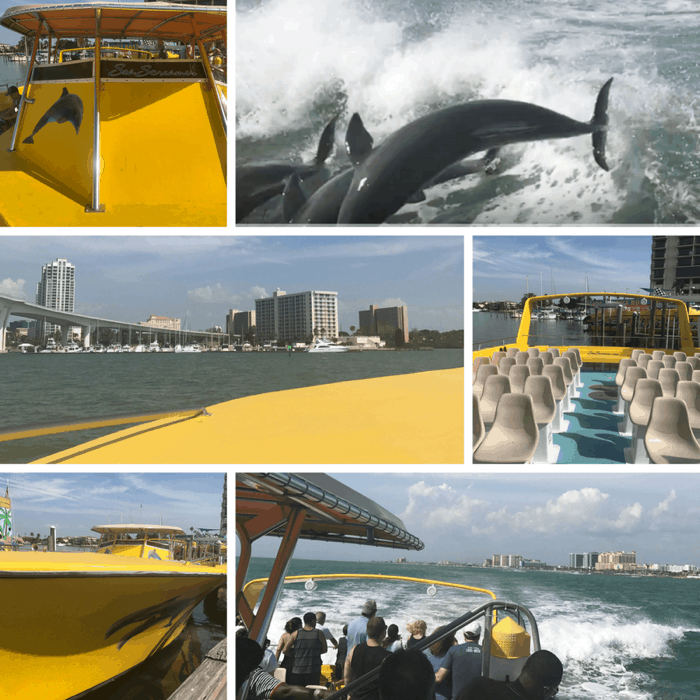 Dolphin sighting tour from The Sea Screamer in Clearwater, FL