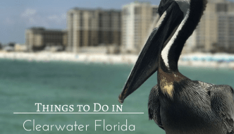 Things to Do in Clearwater Florida