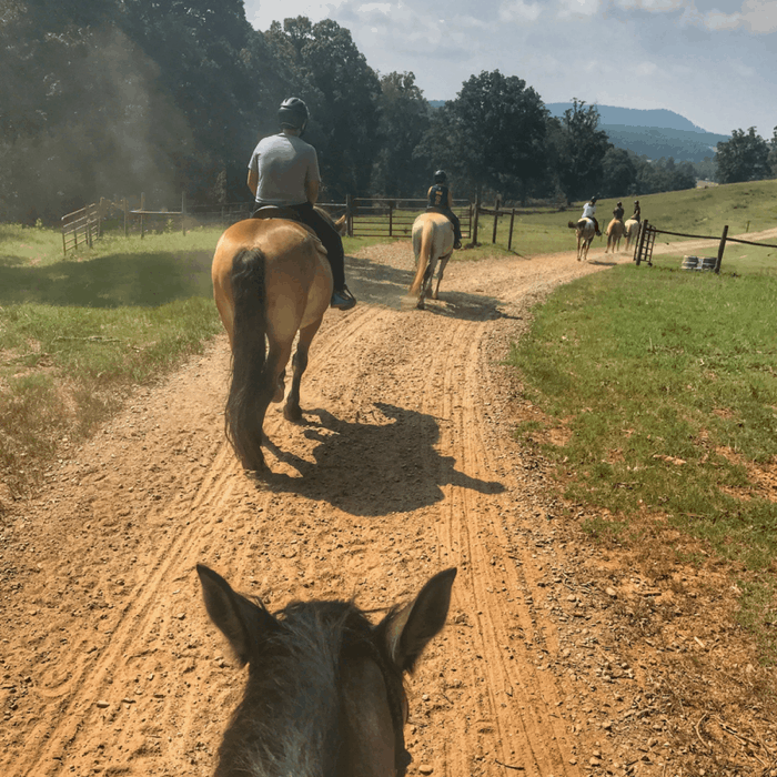 horseback riding at The Biltmore Estate in Asheville NC
