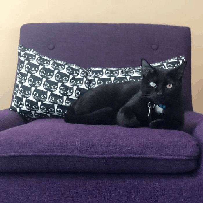 black cat on purple chair at kitty brew cat cafe