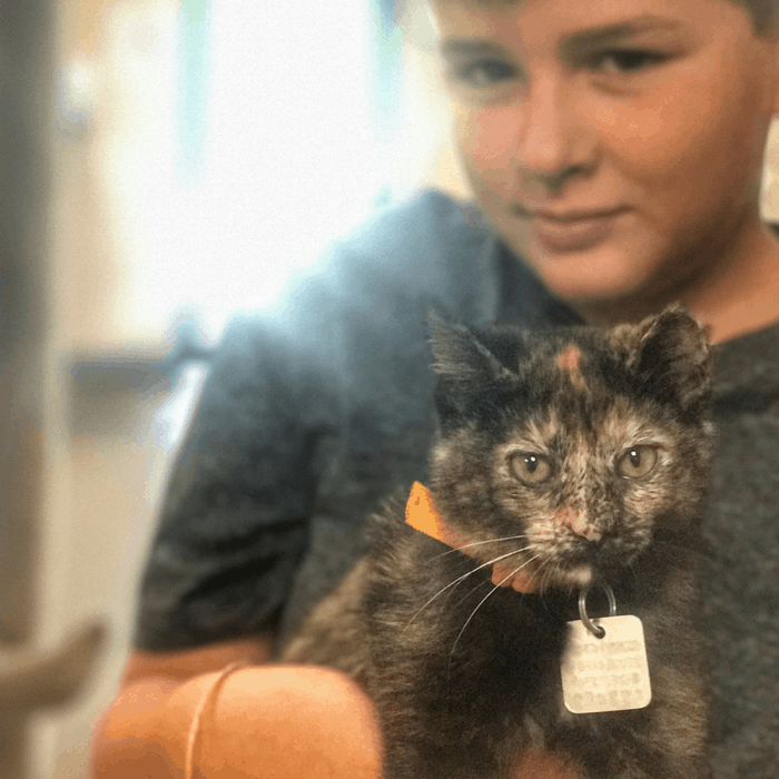 boy with kitten at kitty brew cat cafe