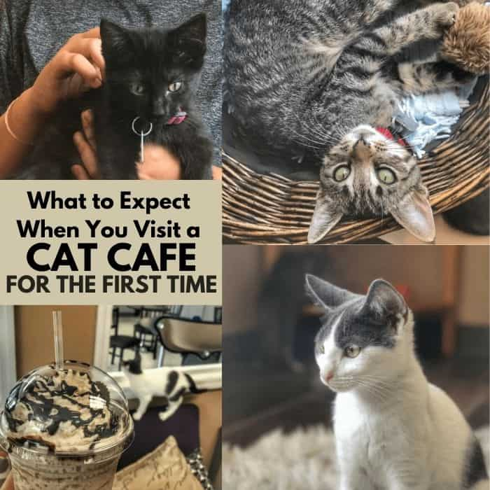 What to Expect When You Visit a Cat Cafe for the First Time