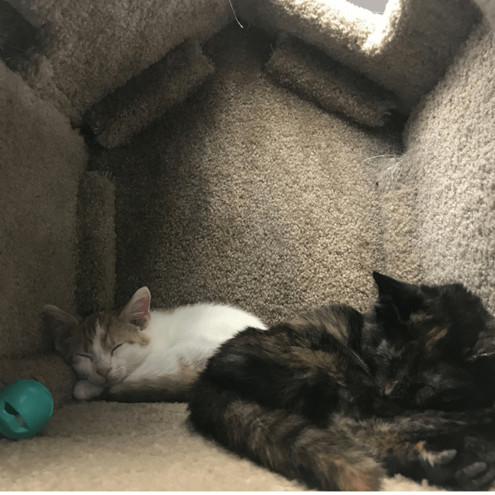 cats sleeping at kitty brew cat cafe